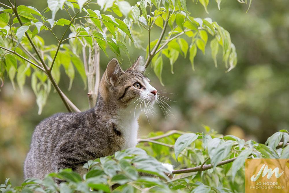 Kelly Cats-18.jpg