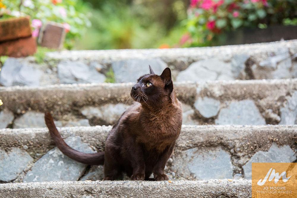 Kelly Cats-23.jpg