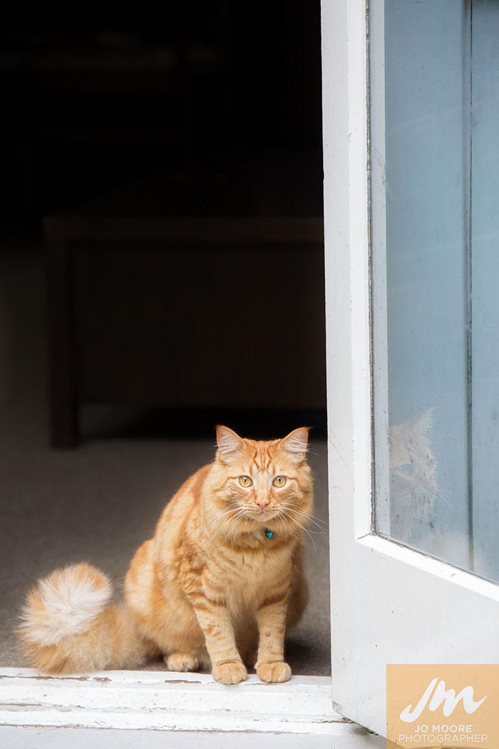 Kelly Cats-24.jpg