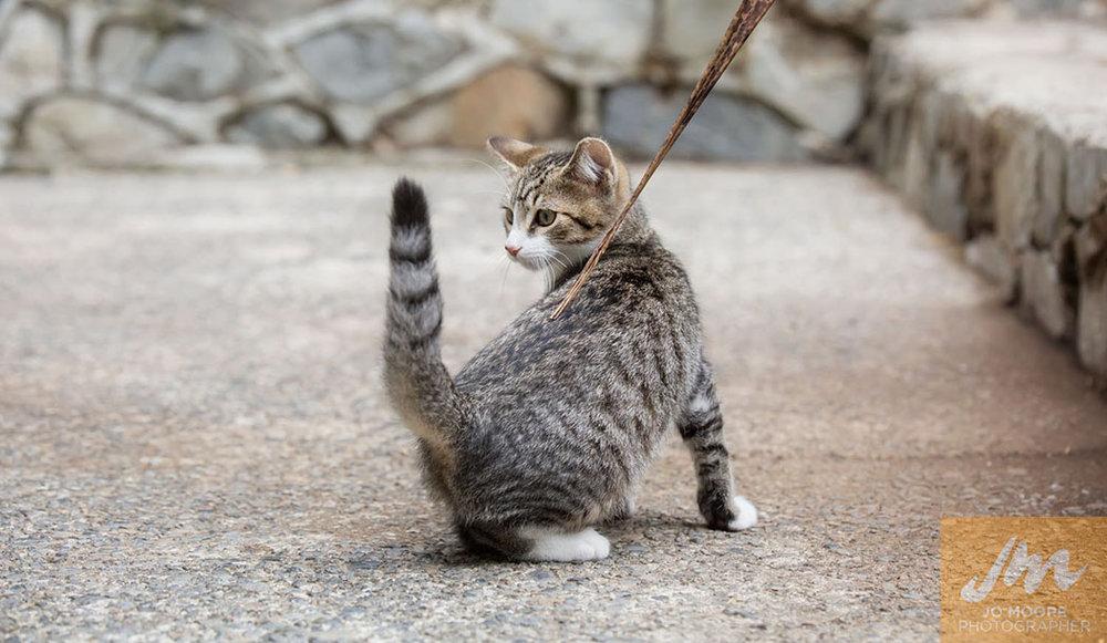 Kelly Cats-27.jpg