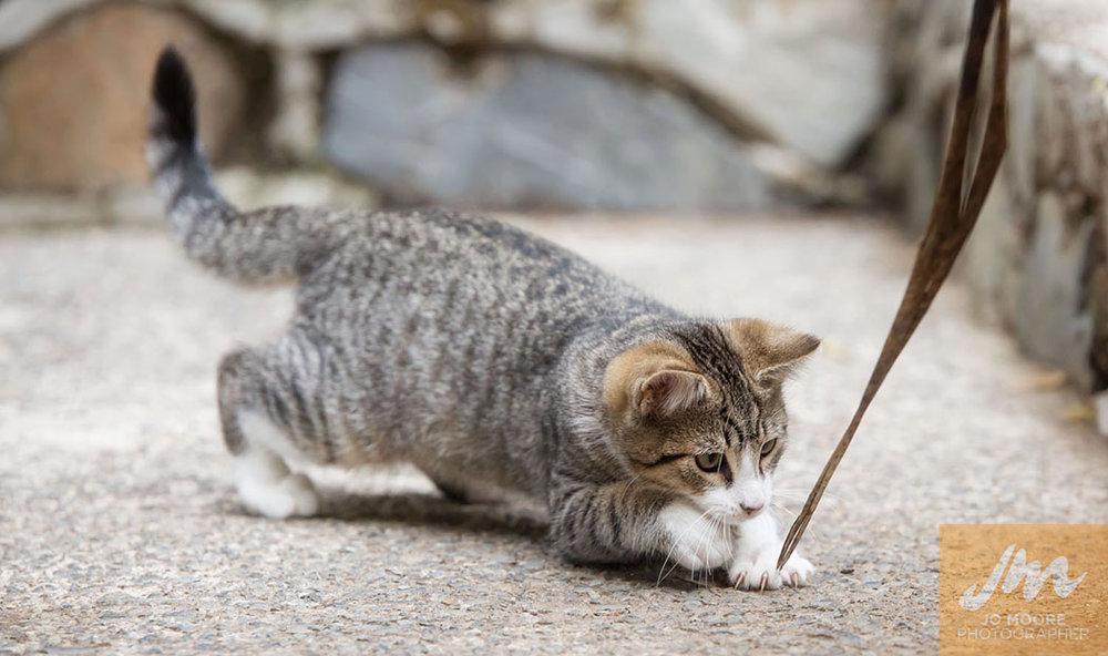 Kelly Cats-29.jpg