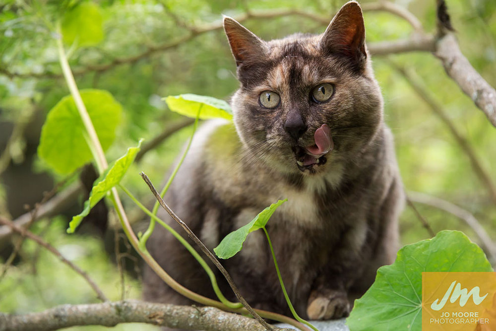 Kelly Cats-41.jpg