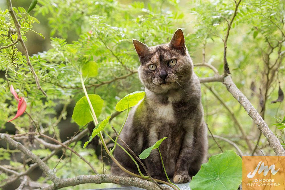 Kelly Cats-43.jpg