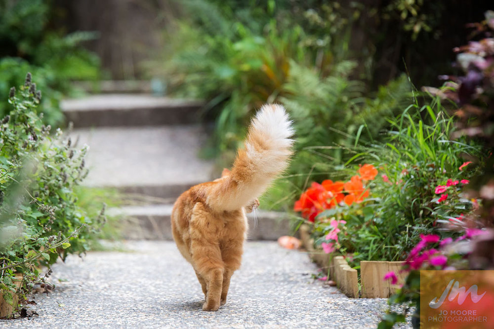 Kelly Cats-47.jpg