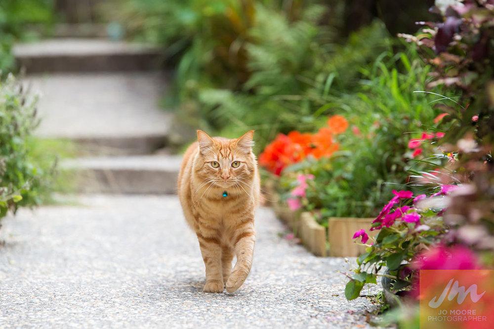 Kelly Cats-49.jpg