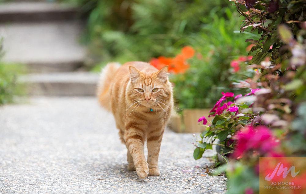 Kelly Cats-51.jpg