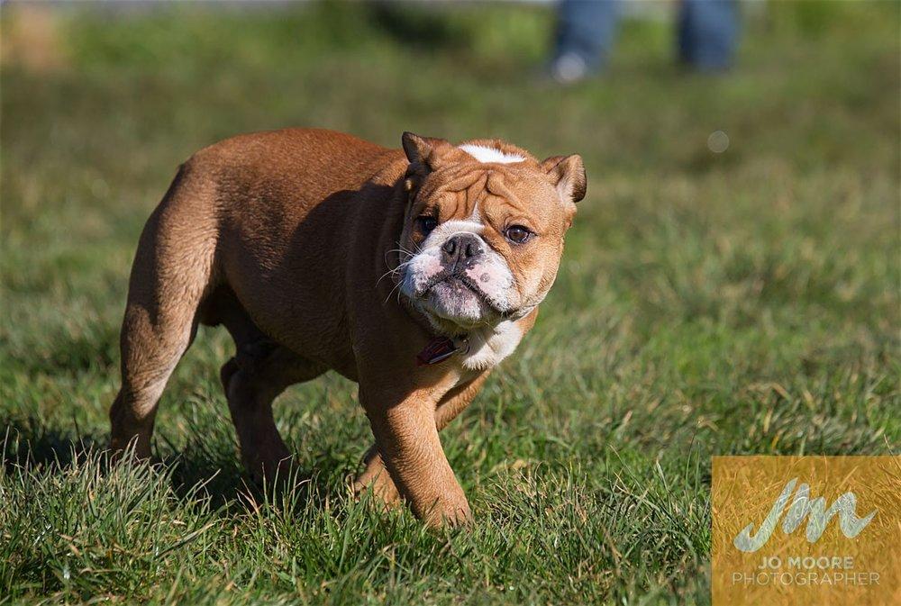 Bulldogs-22.jpg