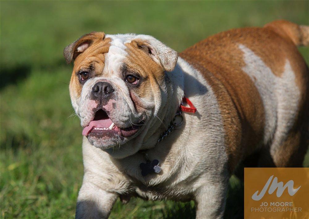 Bulldogs-30.jpg