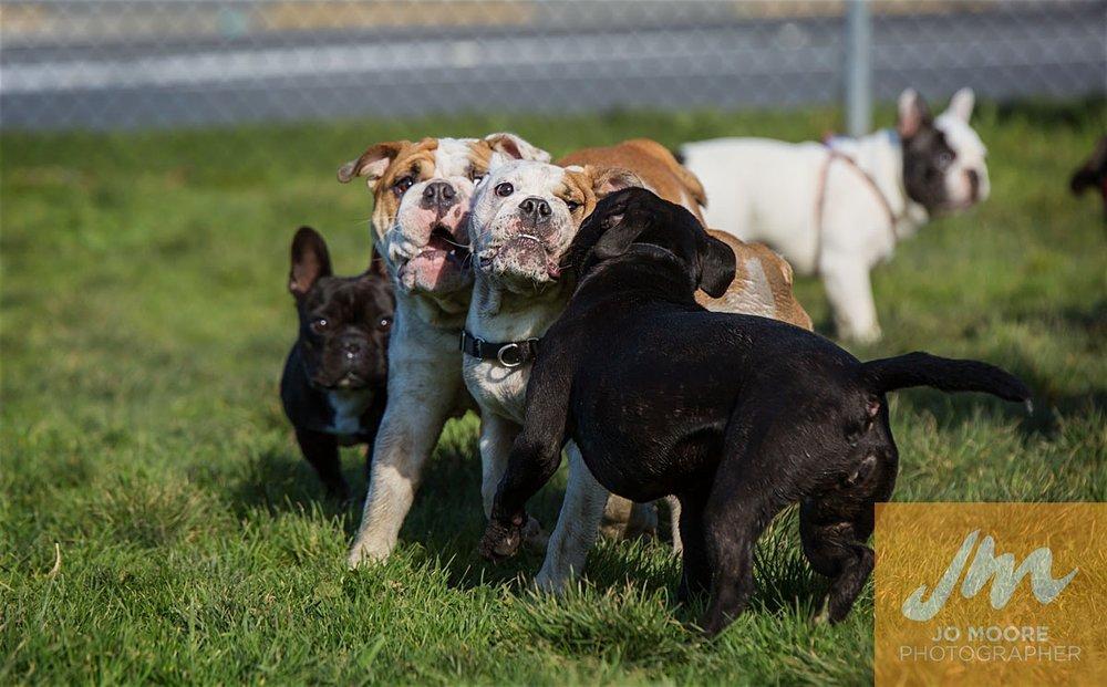 Bulldogs-50.jpg