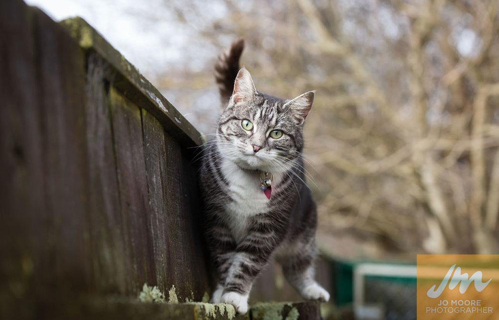 Kitties-4.jpg