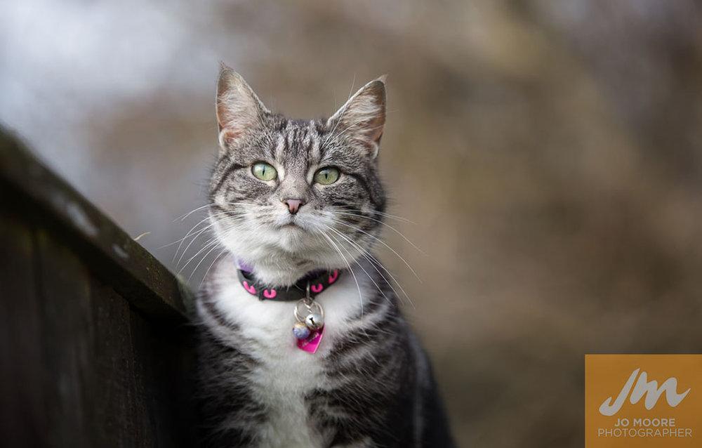 Kitties-10.jpg