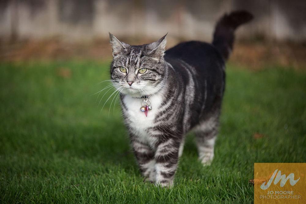 Kitties-15.jpg