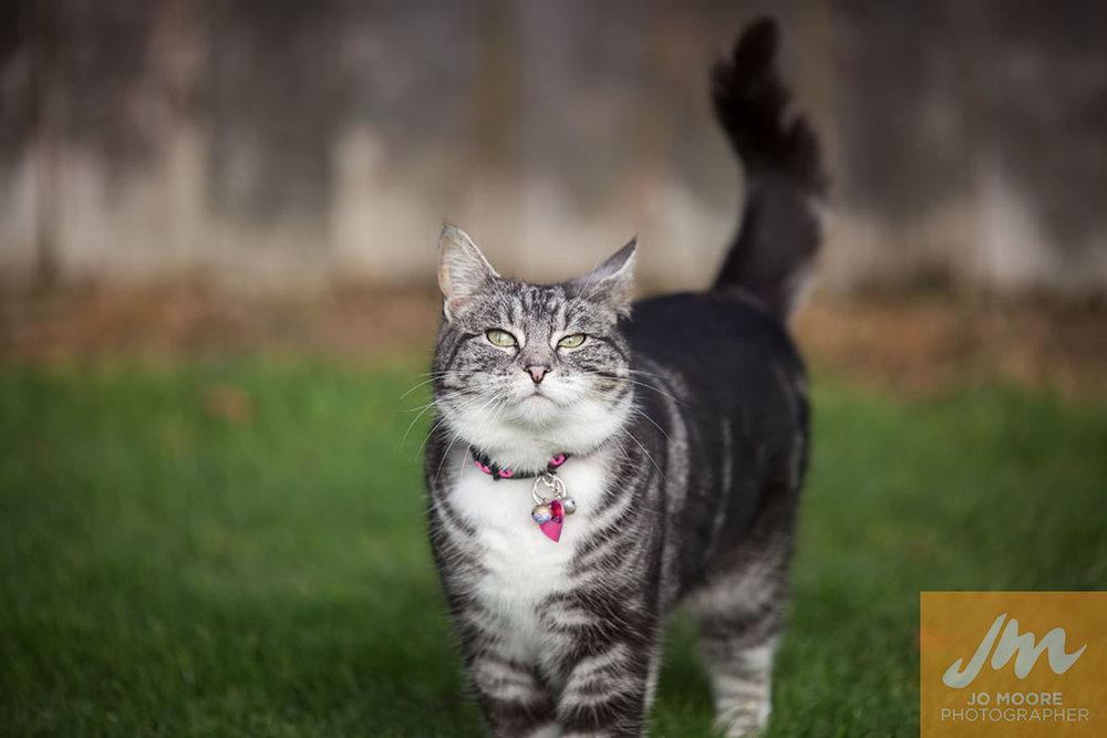 Kitties-14.jpg