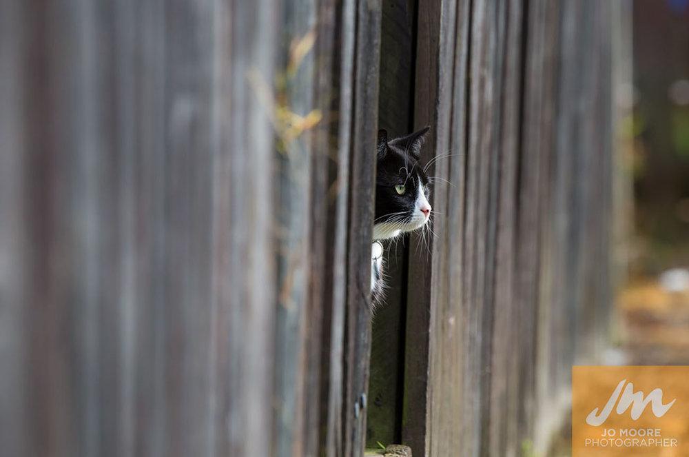 Kitties-18.jpg