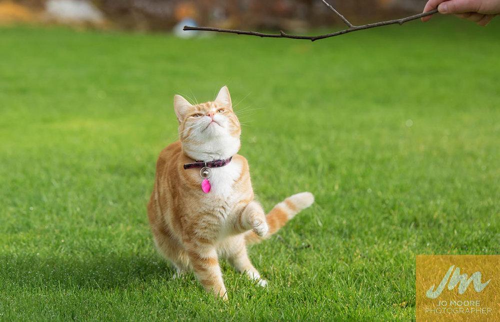 Kitties-27.jpg