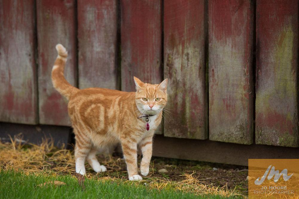 Kitties-42.jpg