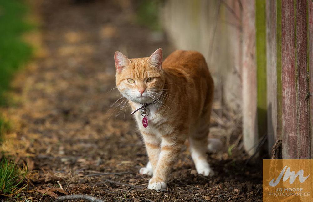 Kitties-65.jpg