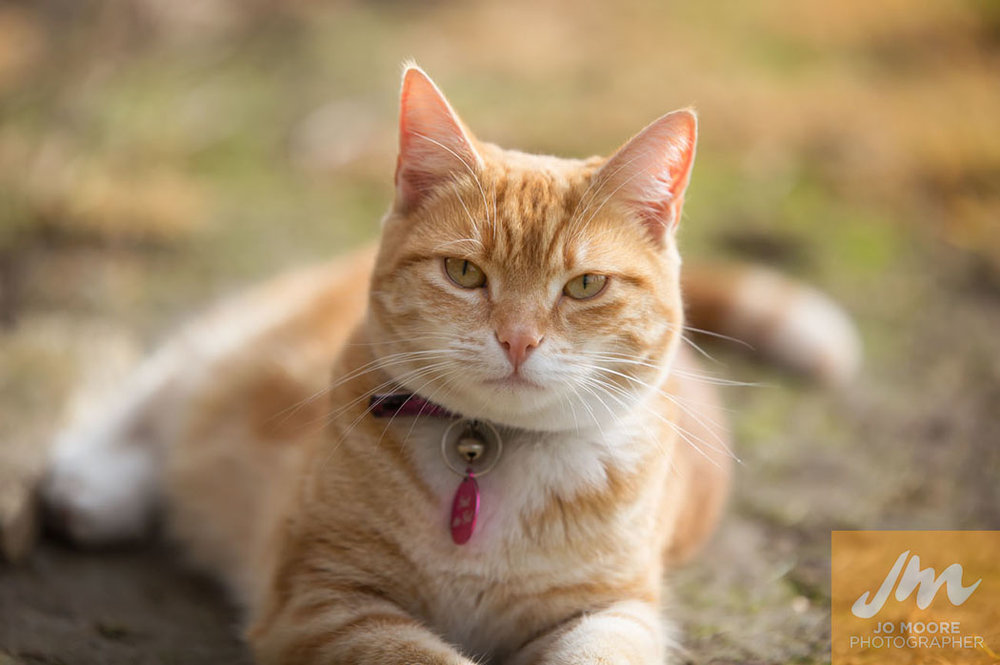 Kitties-73.jpg