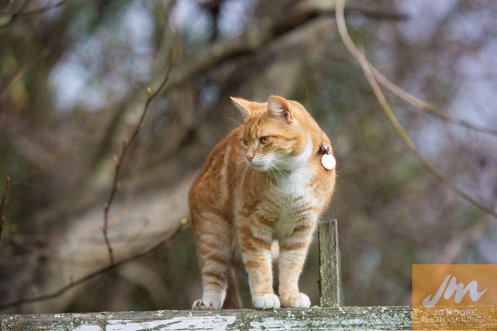 Kitties-89.jpg