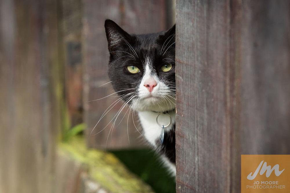 Kitties-53.jpg