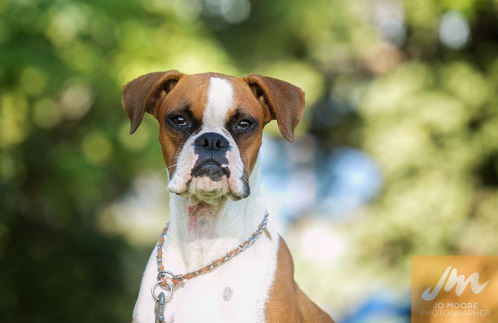 Maui Dogs-5.jpg