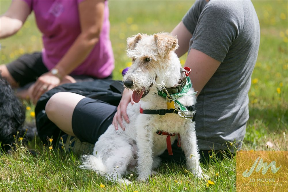 Paws in the Park-147.jpg