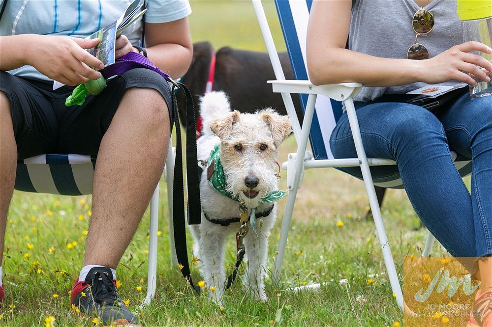 Paws in the Park-150.jpg
