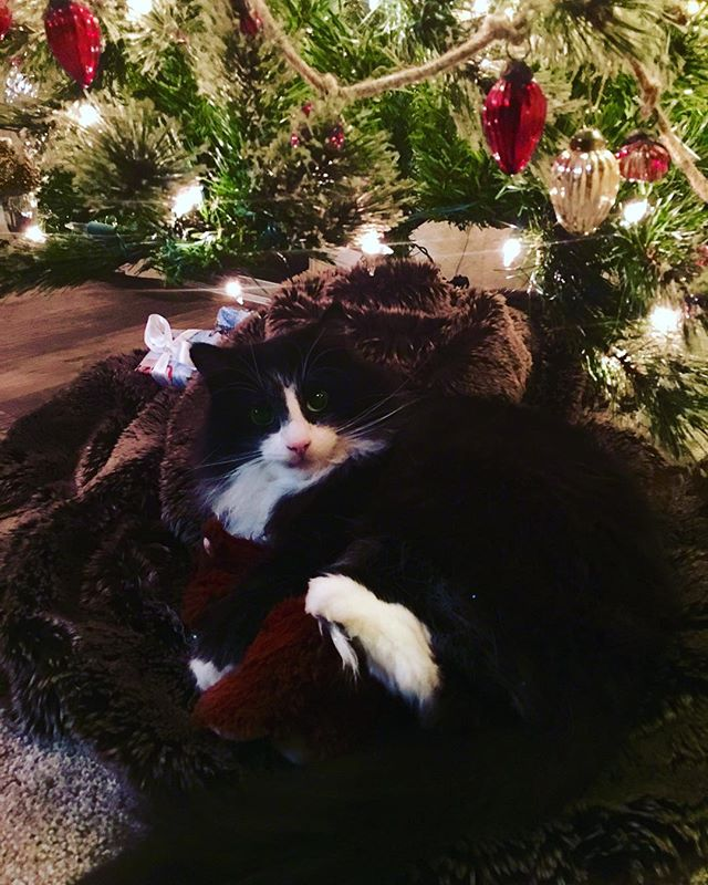 Just found our #kitten #Mickey snuggled up under the #christmastree with his little bear. Talk about #love on this #christmaseve! To those who celebrate, #MerryChristmas!! Happy holidays everyone!