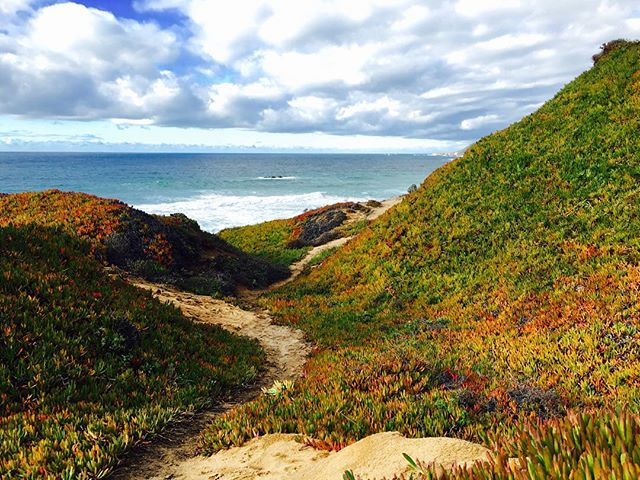 Here's to #2016 and a new #path ahead!  #iPhone #iPhone6 #iPhoneography #BigSur #Monterey #Coast #Coastal #CoastalDrive #Path #Ocean #Beach #Cliff #BayArea #California #vsco #vscocam #Nature #Trees #Clouds #cloudyday #field #lookup #shotoniPhone #startsomethingnew
