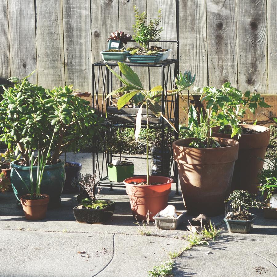 early_garden.jpg