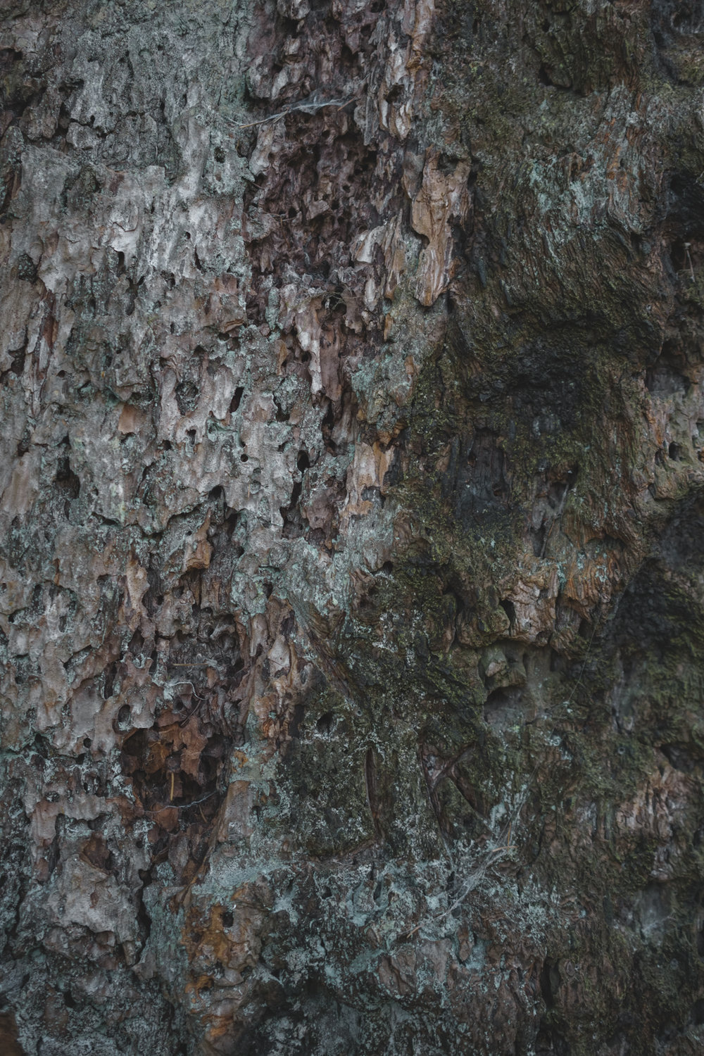 The tree bark shows signs of wear.