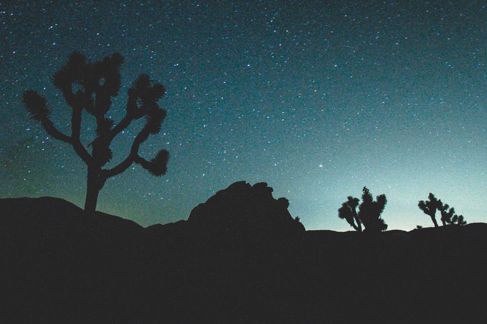 Joshua Tree in the Night Time