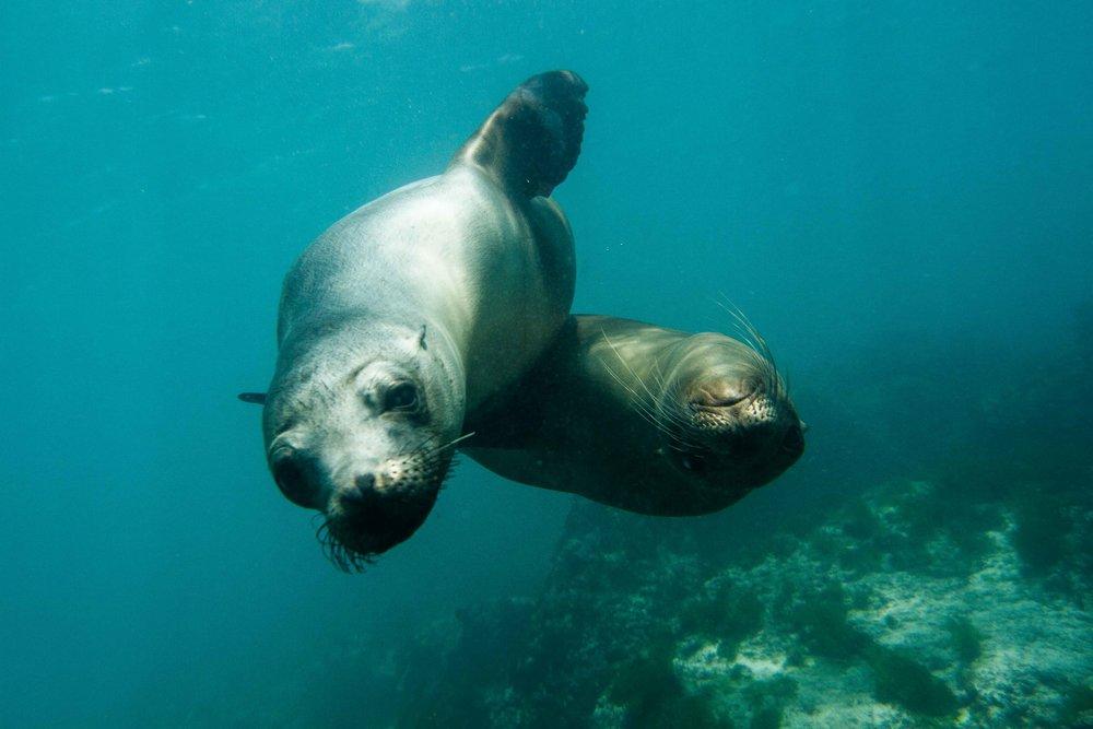 Galapagos-9.jpg