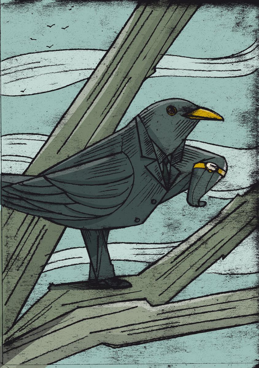 bossy blackbird