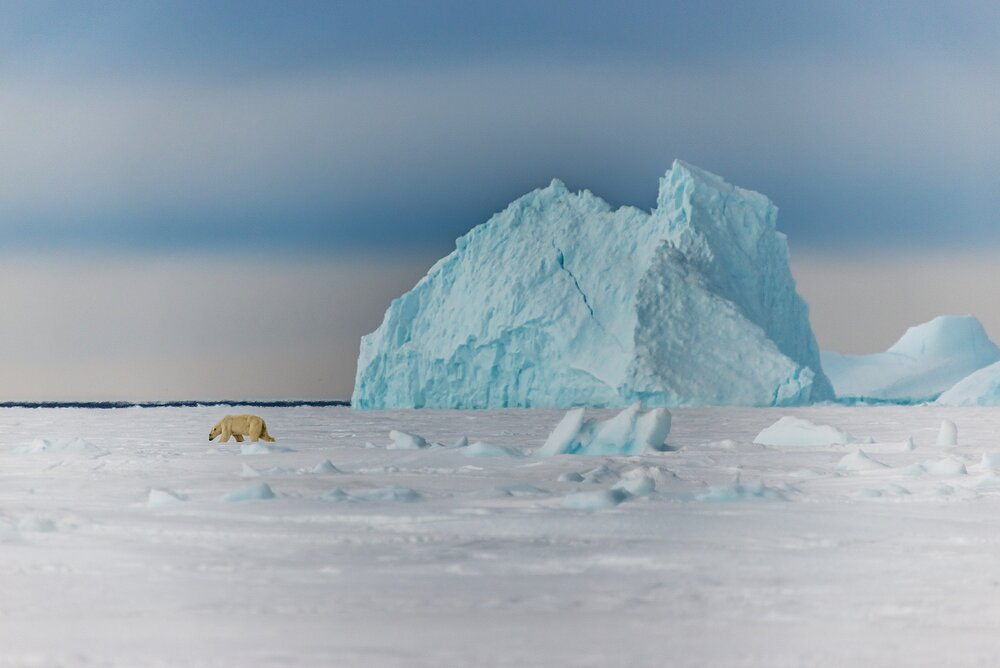 Polar Bear and Iceberg at the Floe Edge - Baffin Bay, Nunavut, Canadian Arctic
