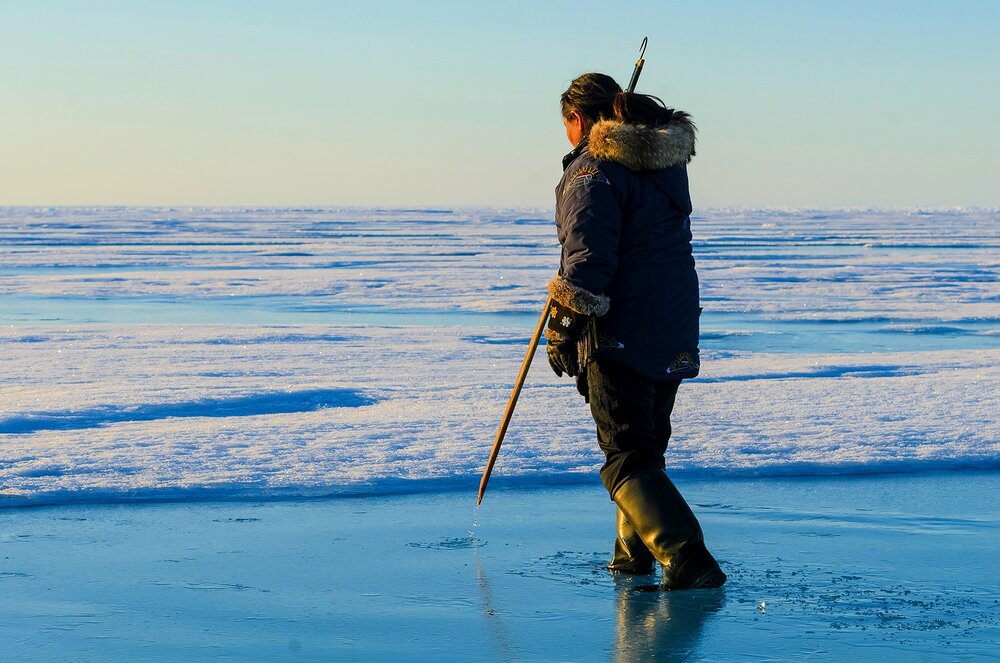 Searching For Seal Breathing Holes - Eclipse Sound, Nunavut, Canadian Arctic