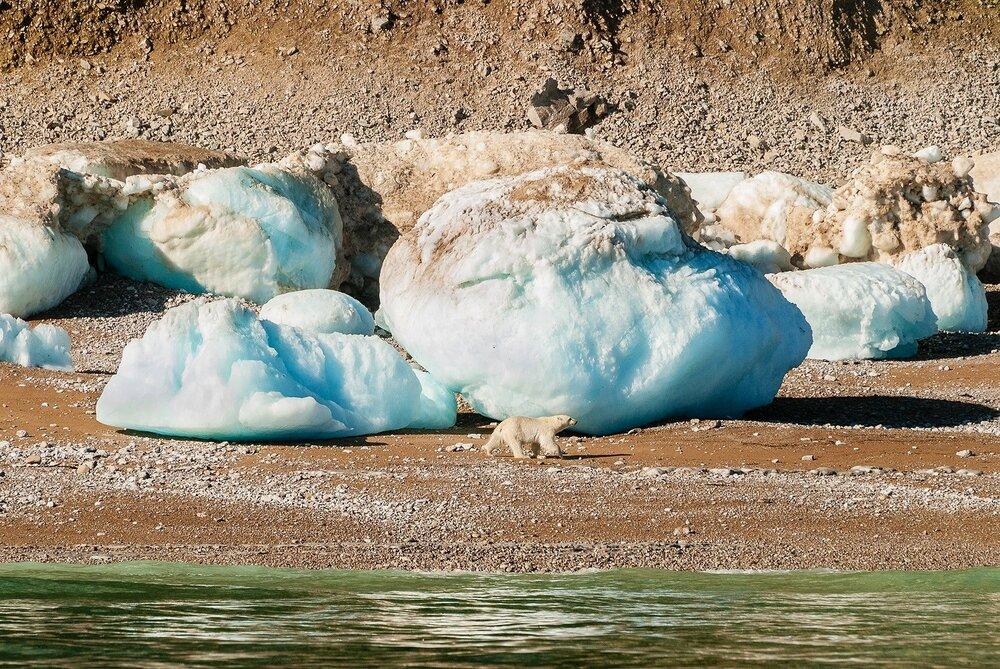 Stranded Polar Bear and Giant Ice Blocks - Nunavut, Canadian Arctic