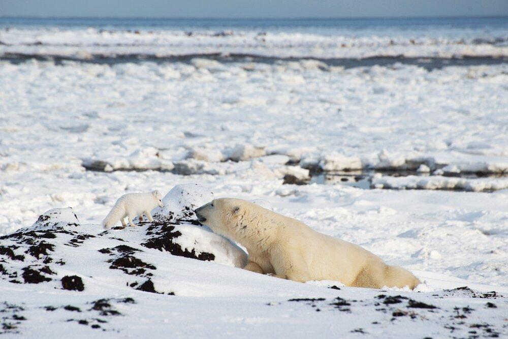 Surprise! - Nunavut, Canadian Arctic