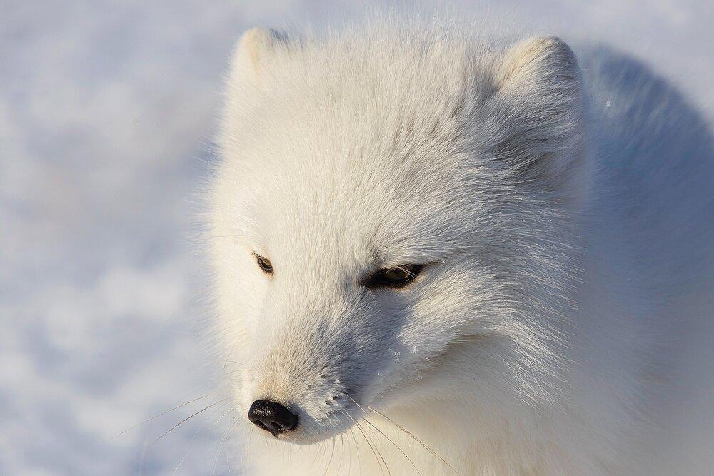 A Quiet Moment - Nunavut, Canadian Arctic