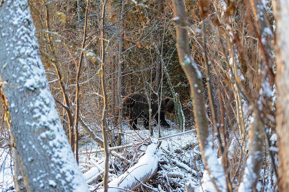 Look Behind You - Yukon Territory, Canada.jpg