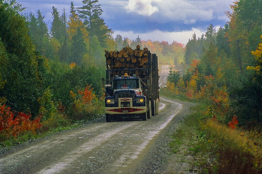 Logging Truck on Woods Road
