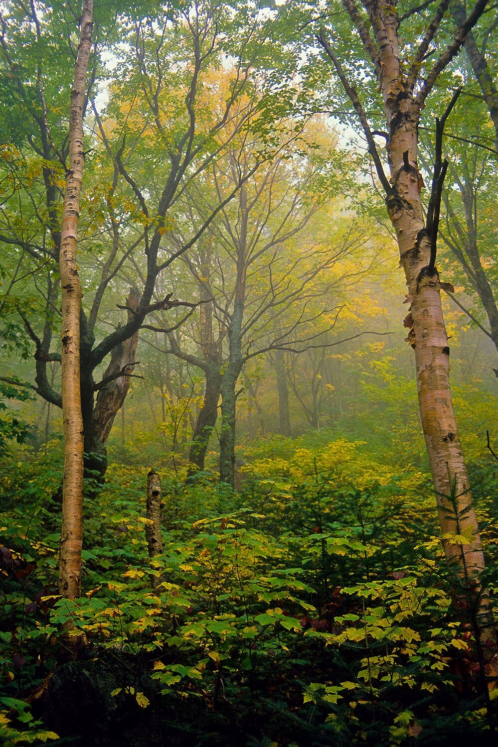 Misty Mountain - White Mountain National Forest, New Hampshire