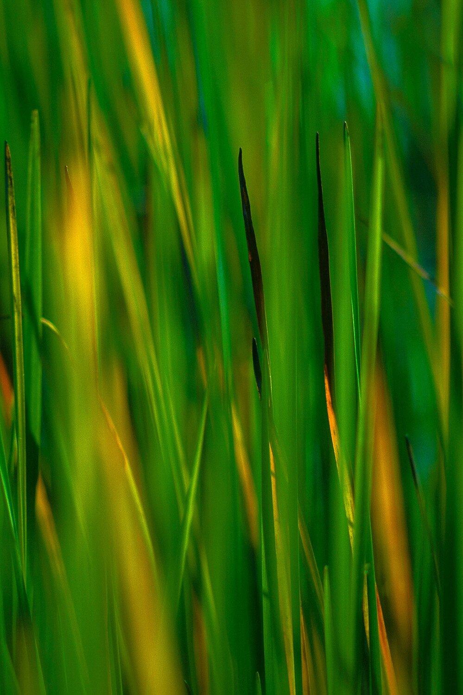 River Grasses - New Hampshire