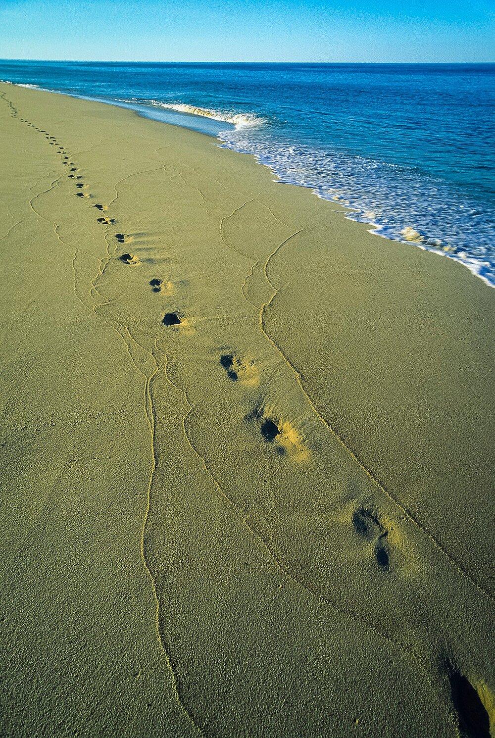 Leave Only Footprints - Cape Cod National Seashore, Massachusetts