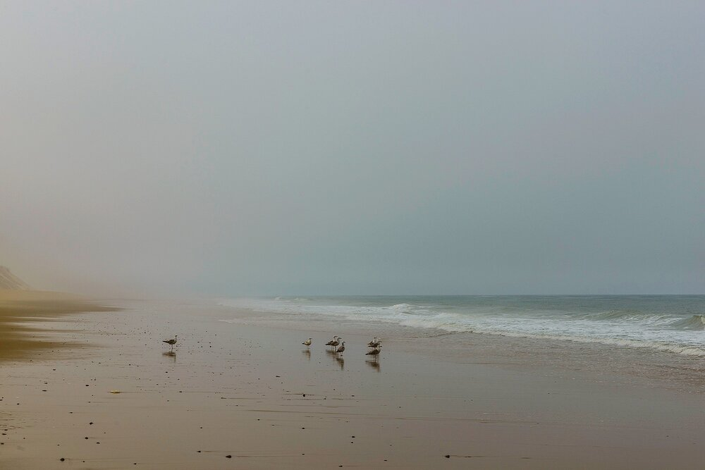 Grounded Gulls on an Ethereal Day - Cape Cod National Seashore, Massachusetts
