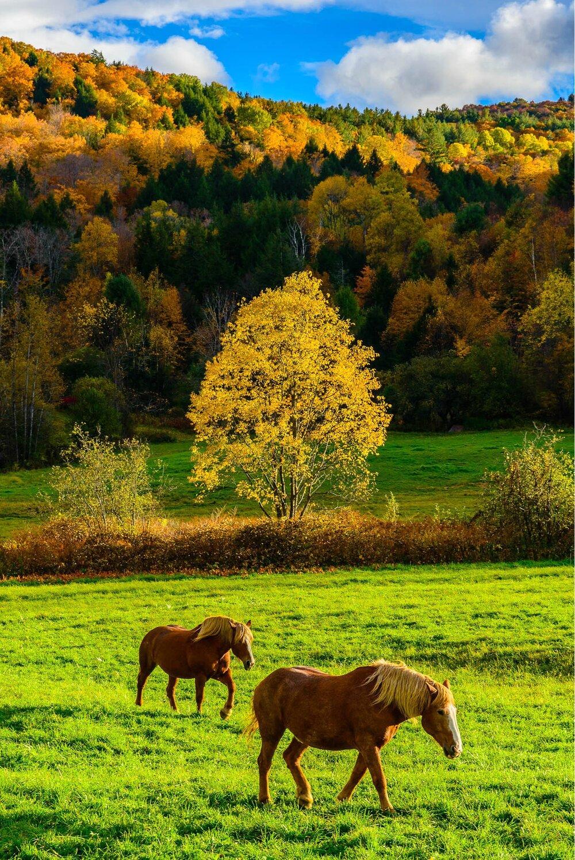 October 2015 - VT Foliage-128.jpg