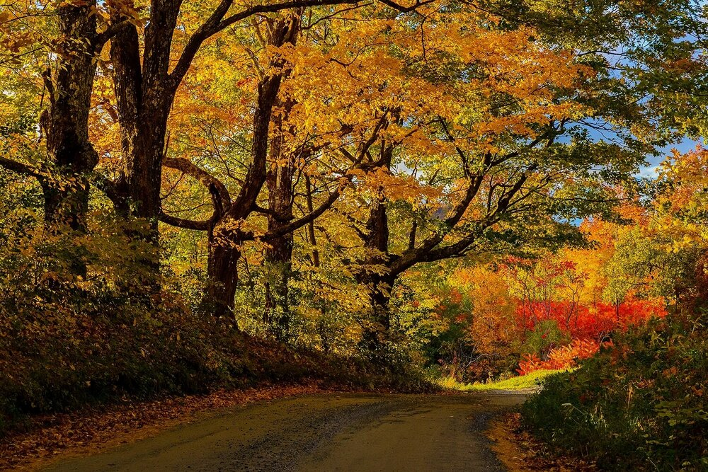 Fiery Autumn Country Road - Vermont