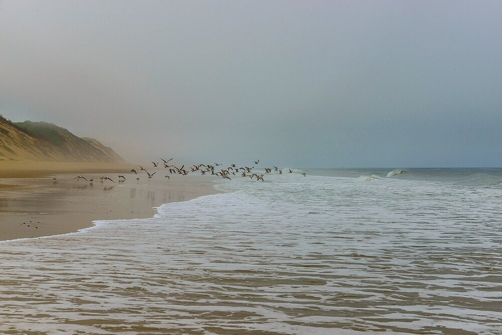 Gulls in Flight on an Ethereal Day - Cape Cod National Seashore, Massachusetts