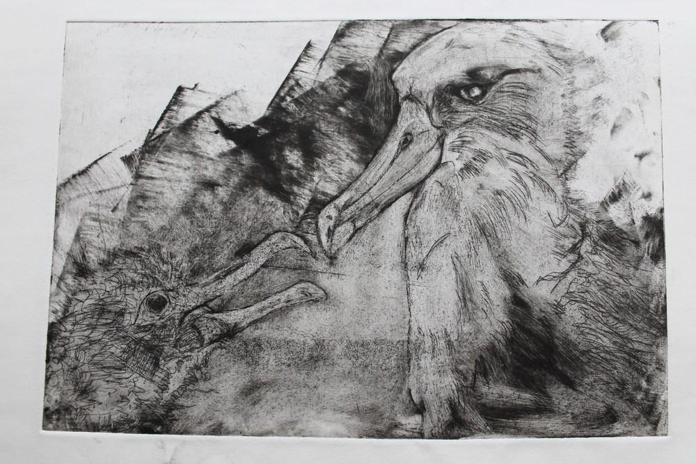 albatrossprint5.JPG