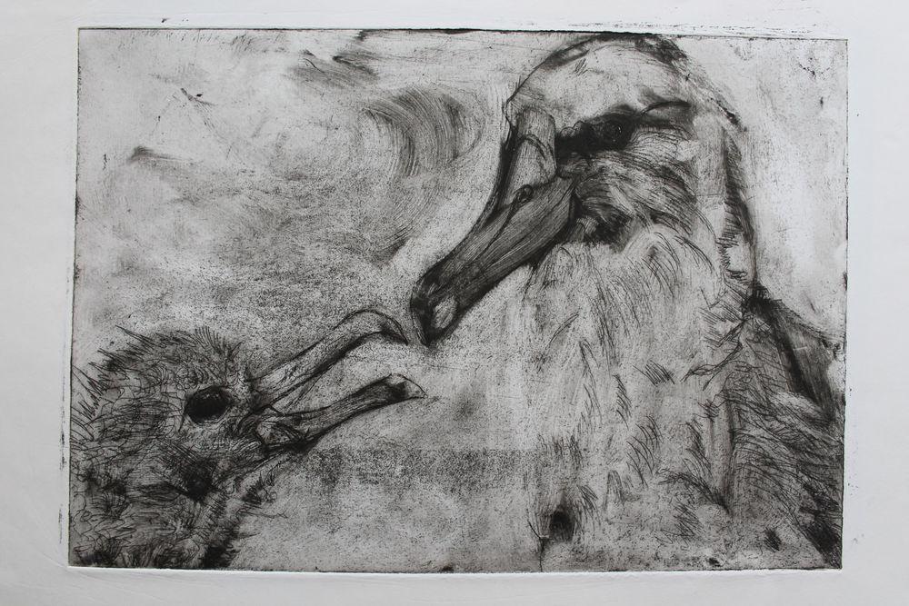 albatrossprint9.JPG